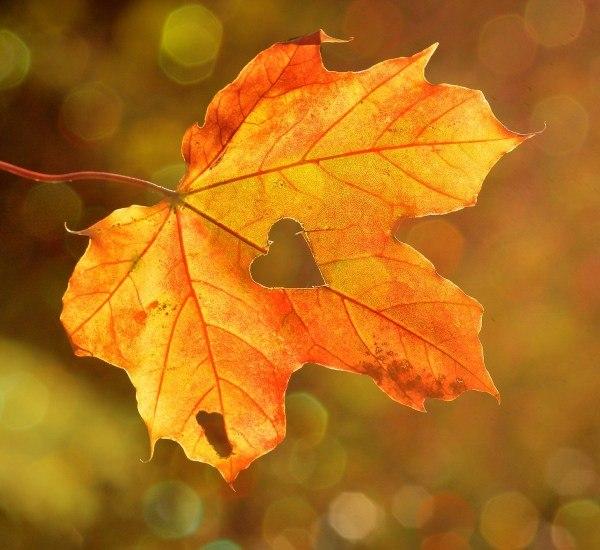 jesien.jpg